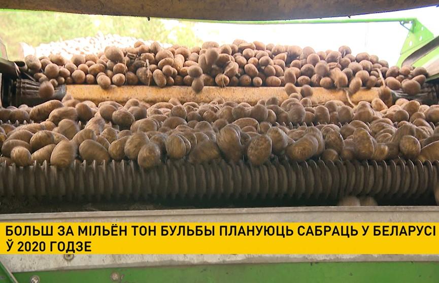 Больш за мільён тон бульбы плануецца сабраць у Беларусі ў 2020 годзе