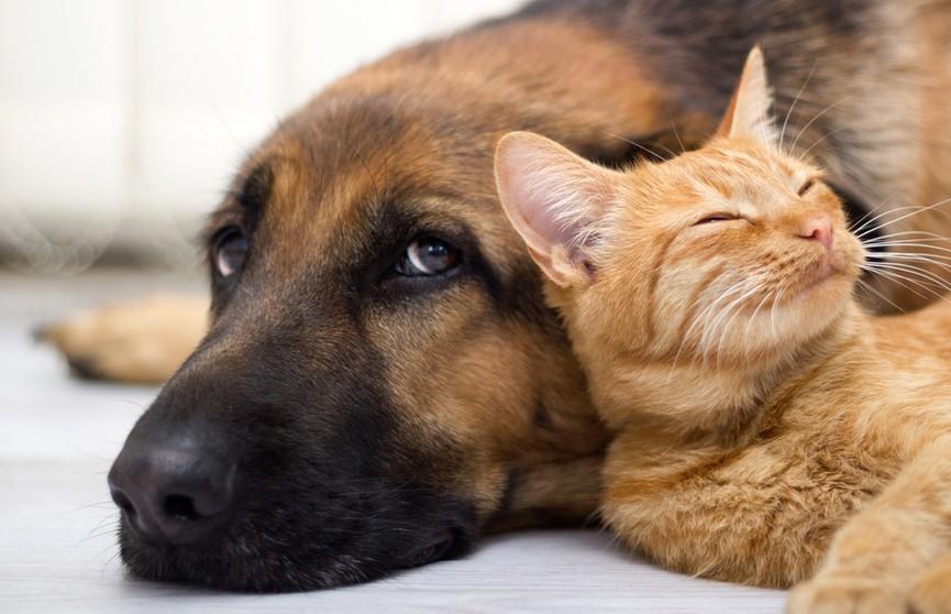 Собака долго целует кошку! Посмотрите, какая милота – пушистая терпит! (ВИДЕО)