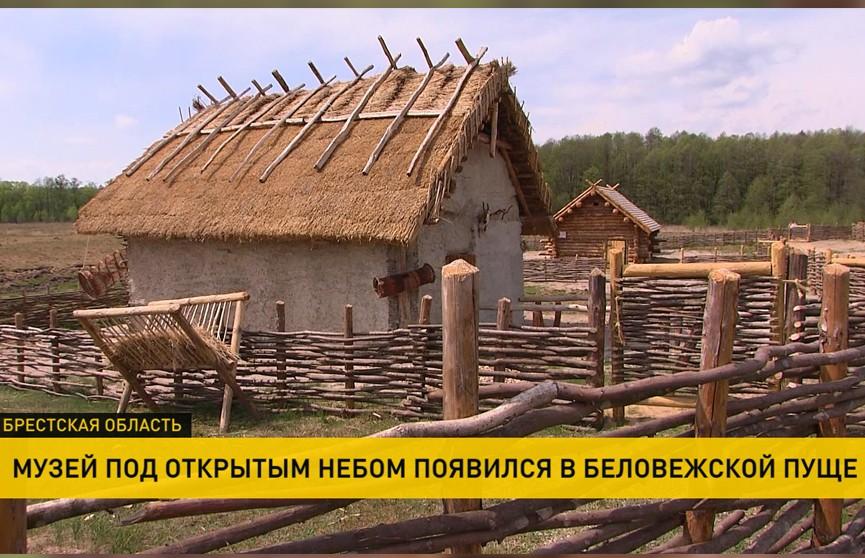 Уникальный музей под открытым небом в Беловежской пуще позволит узнать, чем жили наши предки