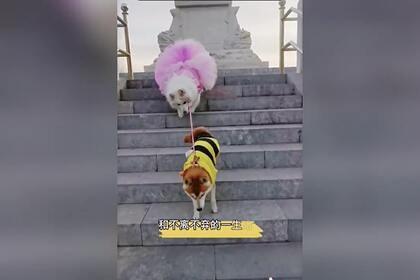 Женщина завела собаку-поводыря для слепой собаки. Теперь питомцы неразлучны