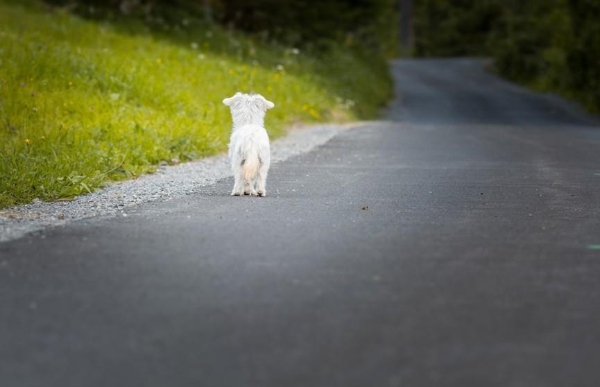 Девушка подобрала на дороге собаку. Но посмотрите, как это было – вы 100% заплачете! Остаться равнодушным невозможно! (ВИДЕО)