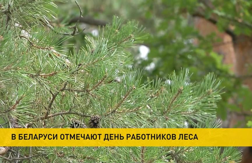 Лукашенко поздравил с профессиональным праздником работников лесного хозяйства и деревообрабатывающей промышленности