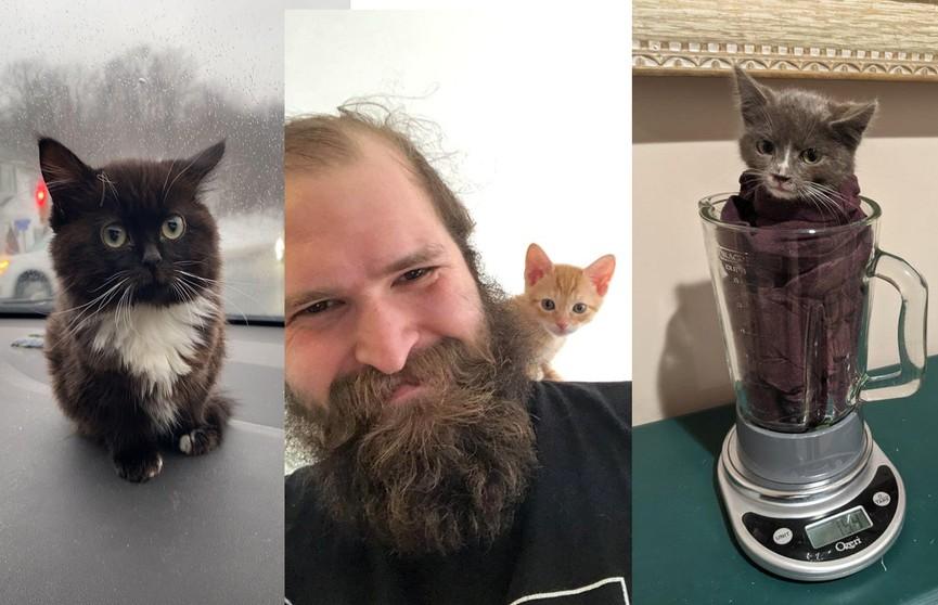 Это незаконно мило! Подборка фотографий крошечных котят