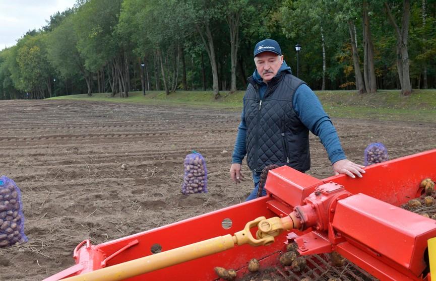 Уборка урожая идет на экспериментальных полях Президента