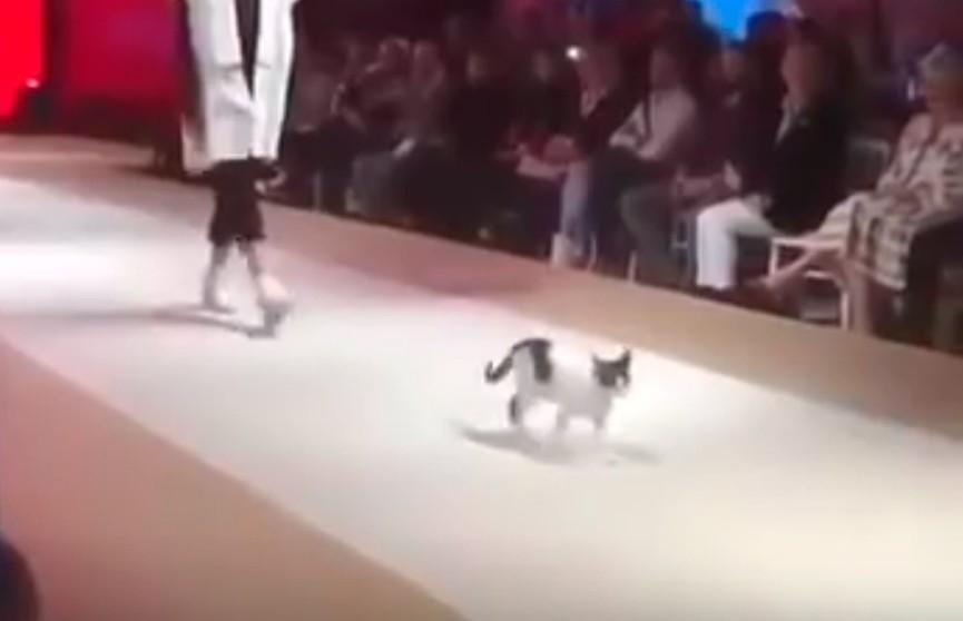 В Стамбуле бездомная кошка прорвалась на модный показ и устроила шоу