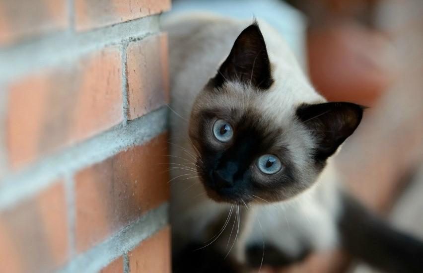 Кот научился отключать будильник своей хозяйки. К чему это привело (ВИДЕО)