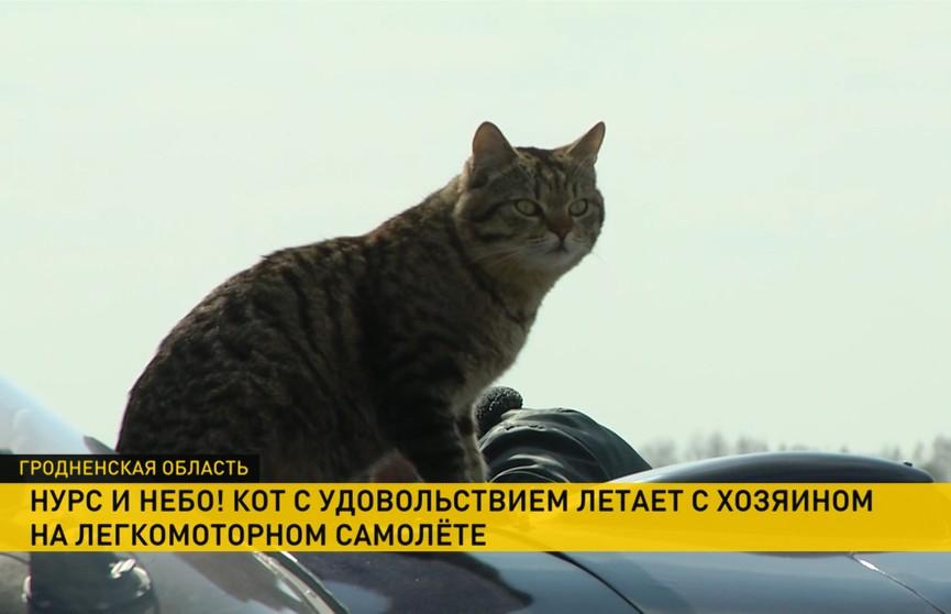 Кот-авиатор живёт на авиабазе в Щучине и вместе с хозяином летает на легкомоторном самолёте