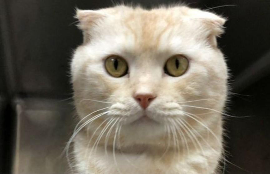 Житель Тайваня отправил кота по почте. Его оштрафовали на несколько тысяч долларов