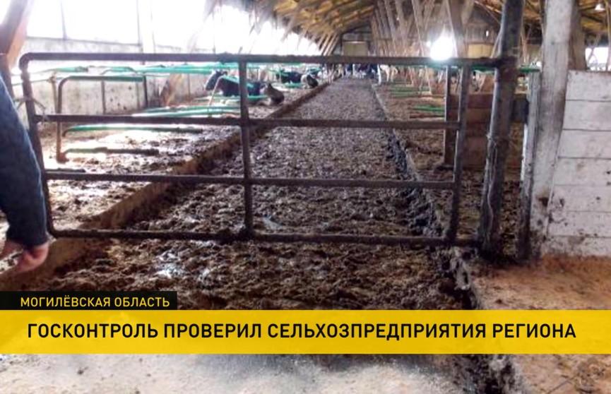 Госконтроль нашёл нарушения в 85 сельхозпредприятиях Могилёвской области