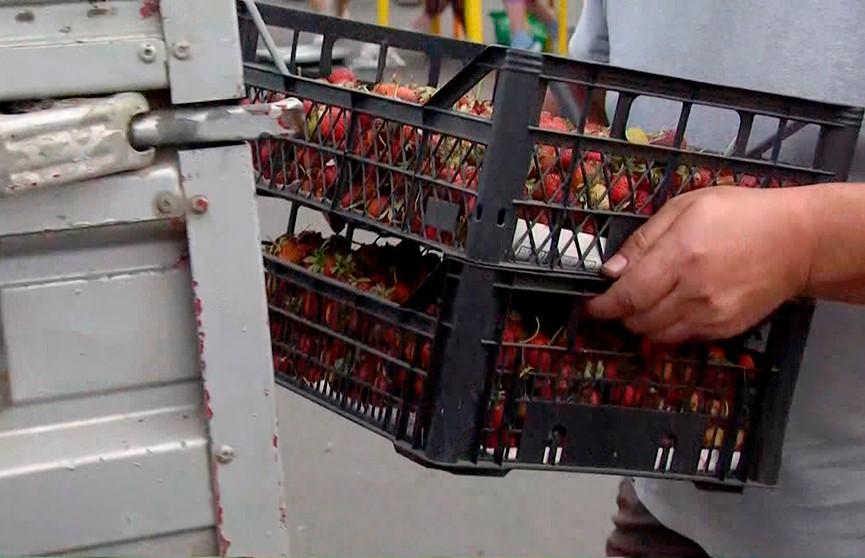 Клубничный урожай в Беларуси: какие цены на ягоду в разгар сезона?