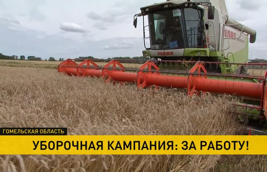 Более половины районов Гомельской области включились в уборочную кампанию