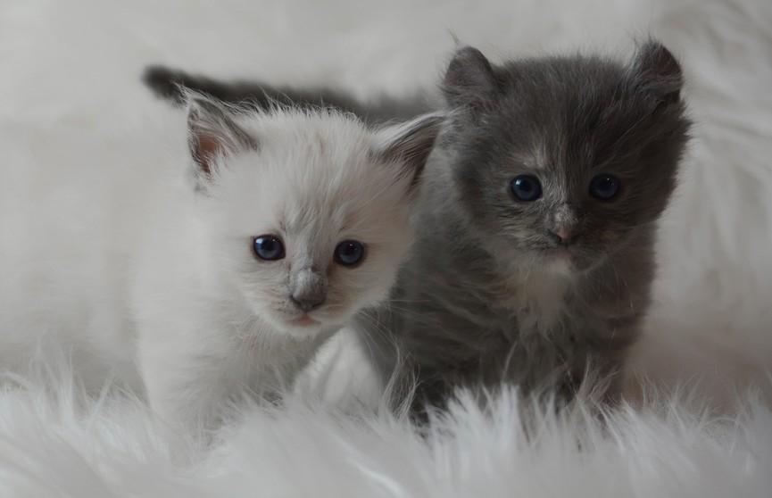 Котята просят хозяина открыть стеклянную дверь. Посмотрите, их действия похожи на танец! (ВИДЕО)