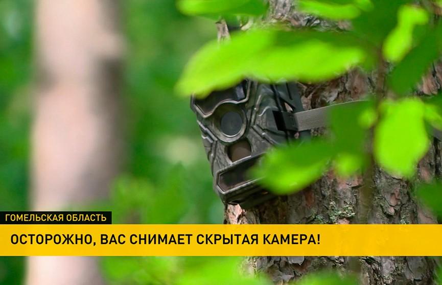 Фотоловушки в белорусских лесах помогли поймать более 300 нарушителей
