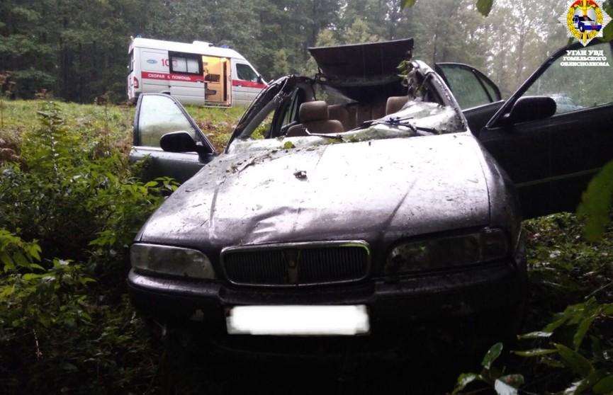 Авто сбил внезапно выбежавшего на дорогу лося в Гомельском районе