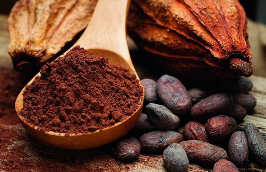 Беда для сладкоежек: к 2050 году может исчезнуть шоколад