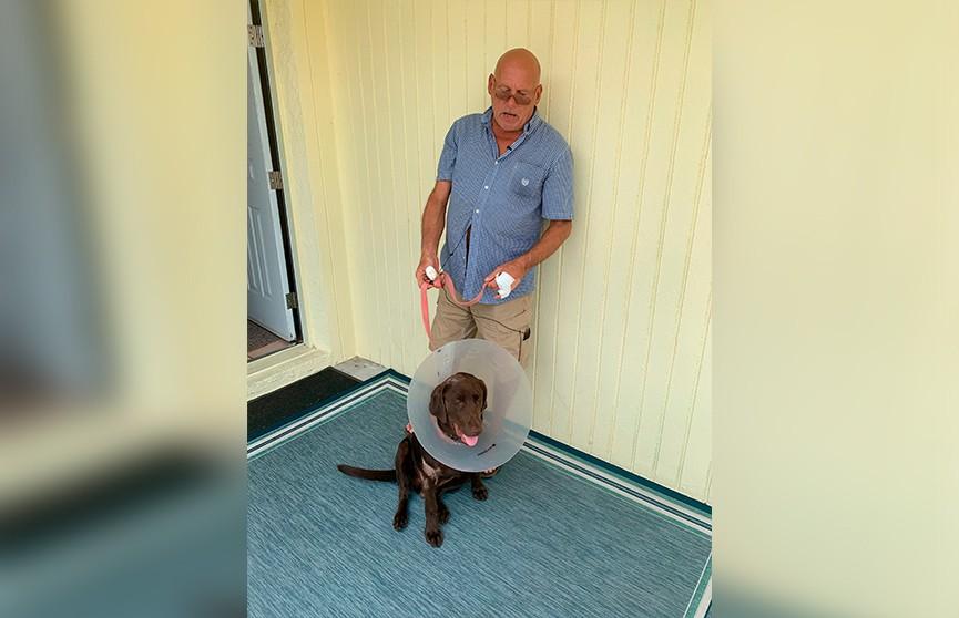 Во Флориде мужчина отбил своего пса у аллигатора, пытавшегося утащить питомца под воду