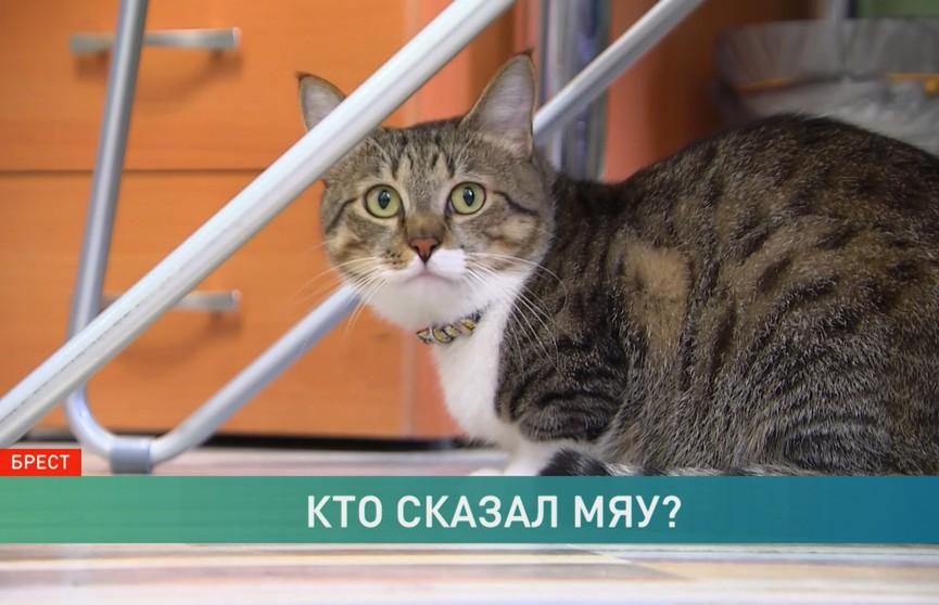 Пиар-менеджер офисного кота: в Беларуси стали появляться необычные вакансии