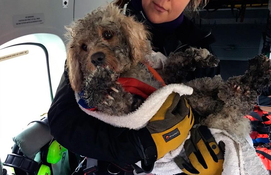 Потерявшегося в горах Шотландии пса спасли с помощью вертолёта (ВИДЕО)