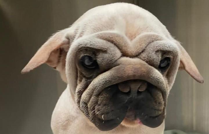 Парень спас отгибели необычного щенка. Теперь малыш— звезда Instagram, имногие себе хотят такого же