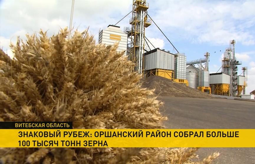 Оршанский район собрал больше 100 тыс. тонн зерна: это стратегический продукт для Витебской птицефабрики