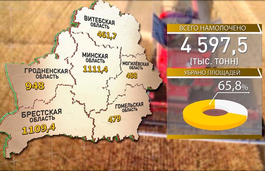 Белорусские аграрии собрали более 4,5 млн т зерна