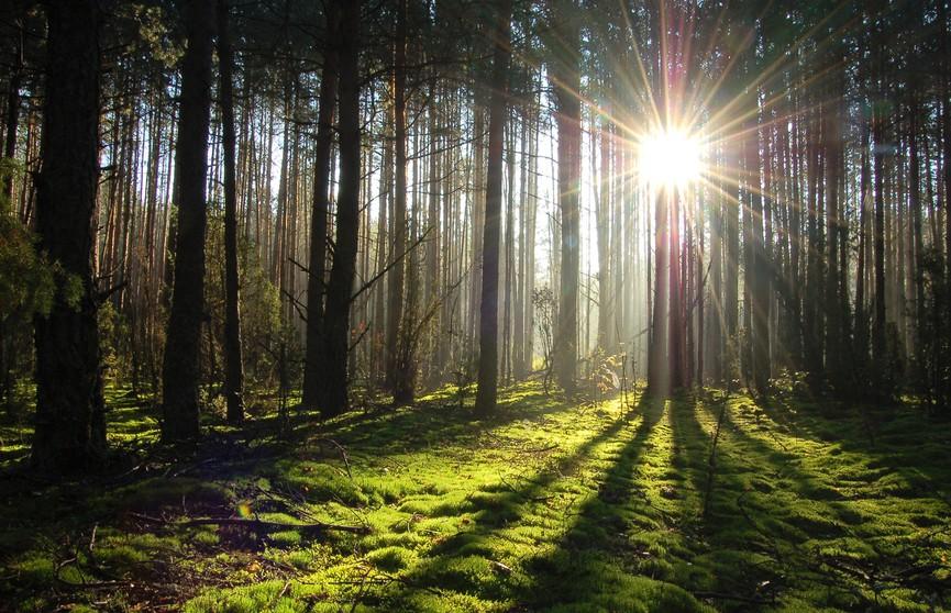 Беловежская пуща вошла в  рейтинг лучших мест для путешествий в 2020 году от National Geographic