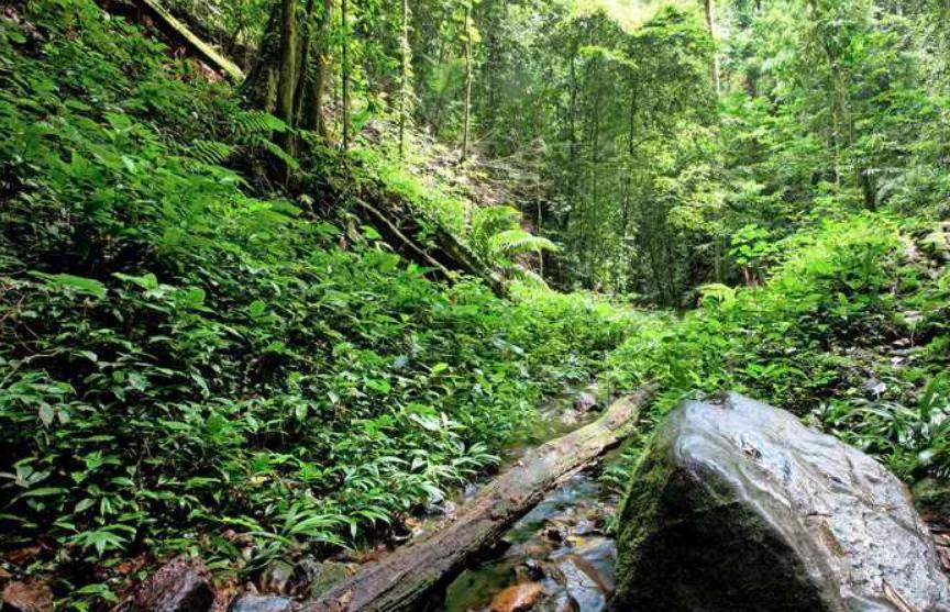 В джунглях Амазонии через 34 дня нашли заблудившуюся женщину с детьми