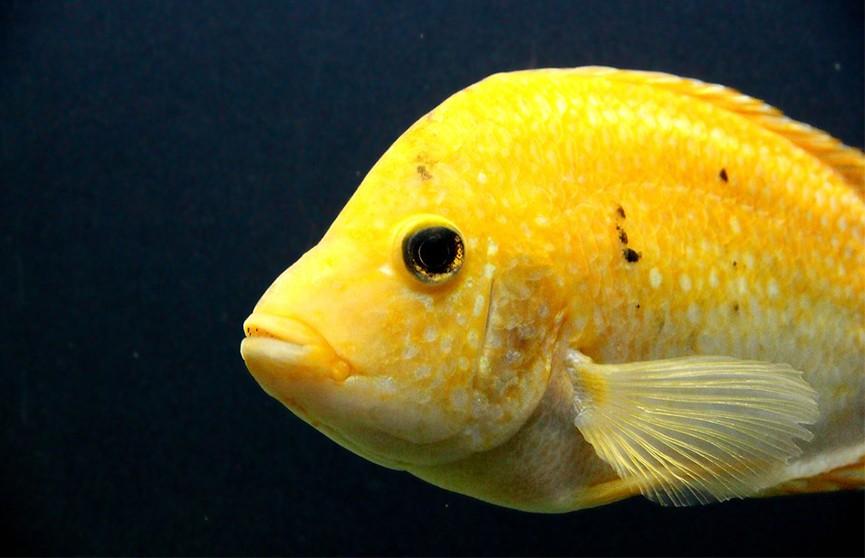 Учёные полагают, что от неразделённой любви страдают даже рыбы