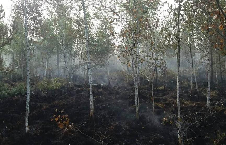 Лесной пожар ликвидирован в Лидском районе