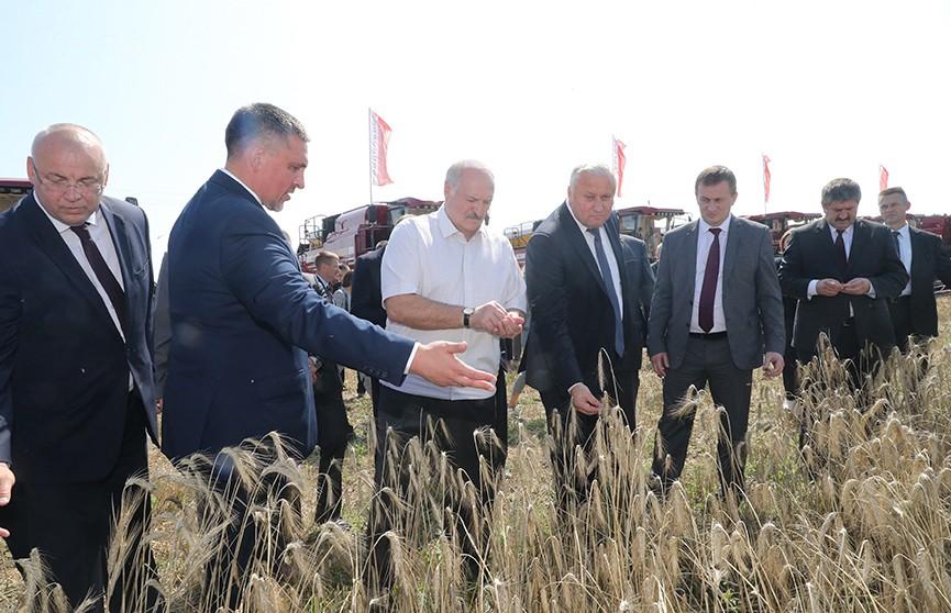 Лукашенко лично оценил ход уборочной кампании: подробности поездки Президента в Гомельскую область