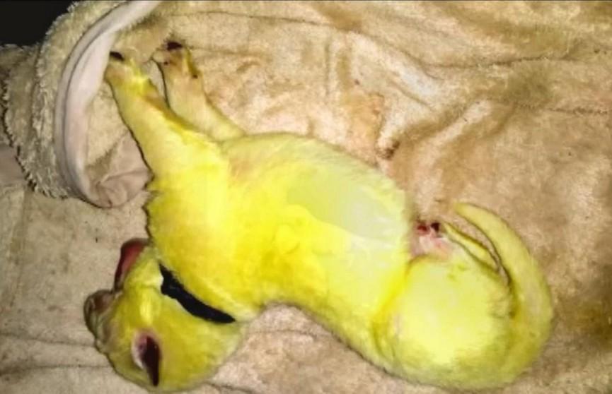 Белая овчарка родила зелёного щенка. Его назвали Халком из-за характера