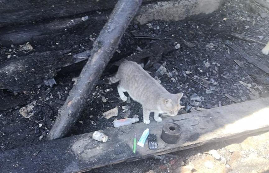 Кошка спасла спящих россиян от пожара