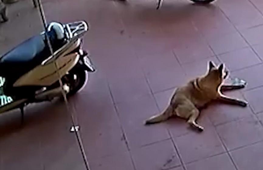 Пёс заметил выпавшие из кармана женщины деньги и охранял их до её приезда