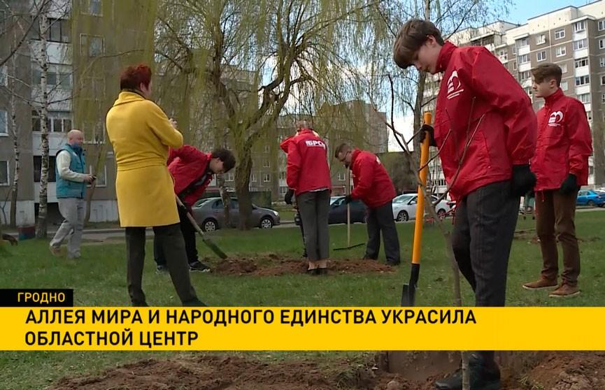 Аллея мира и народного единства появилась в Гродно