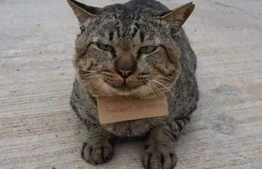В Таиланде кот на три дня ушел из дома, а вернулся с долгами для хозяина