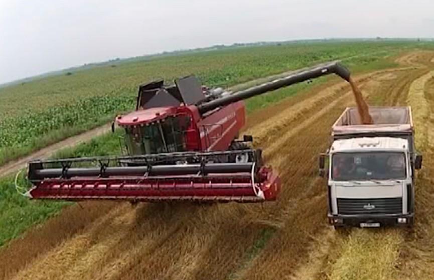 Беларусь может собрать около 6 миллионов тонн картофеля