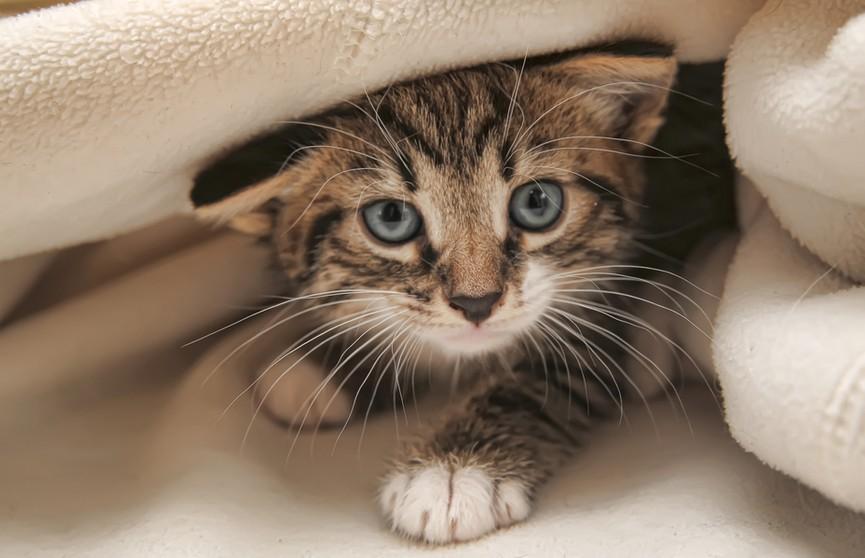 Посмотрите, что делает котенок, чтобы разбудить хозяйку. Безотказный прием! (ВИДЕО)