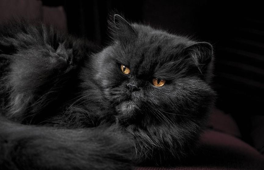 «Сидят тут всякие, пройти невозможно»: кот избил человека и удивил пользователей Сети. Смотрите со звуком!