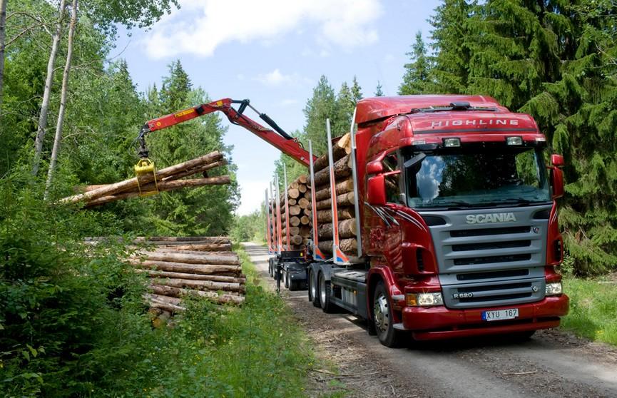 Два брата из Латвии незаконно поставляли белорусскую древесину в ЕС