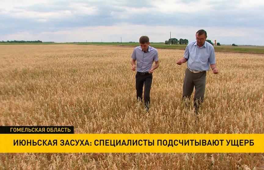 Июньская засуха: как аграрии планируют восполнить потери урожая?