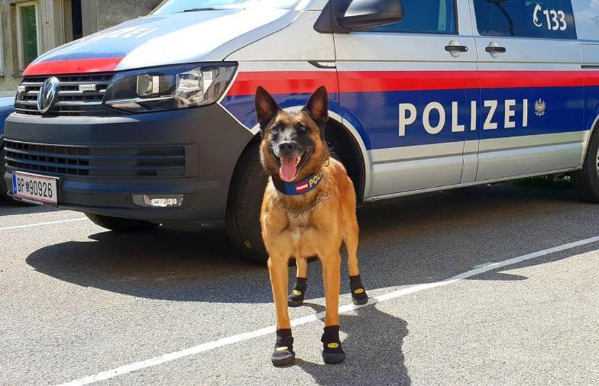 Ботинки для полицейских собак выдали в Австрии