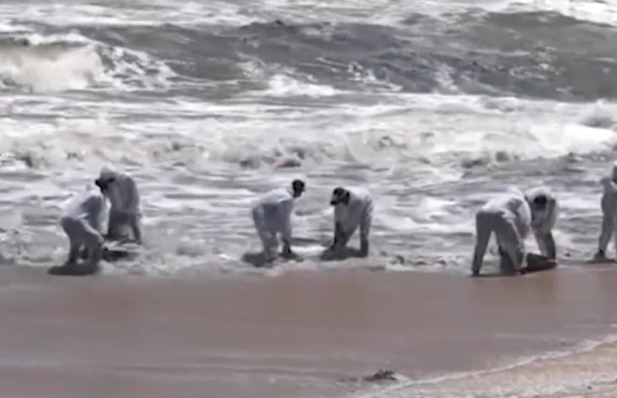 Правительство Шри-Ланки обвиняют в экологической катастрофе