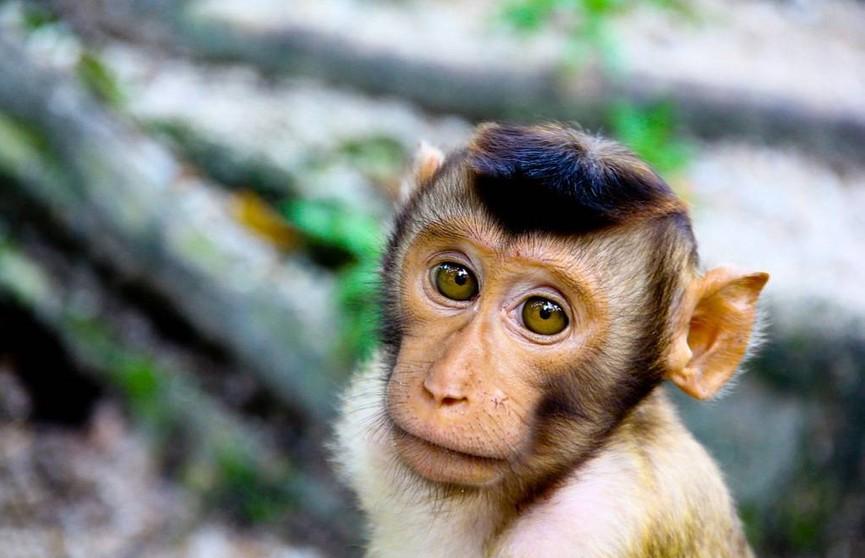 10 человек умерли от оспы обезьян в Конго