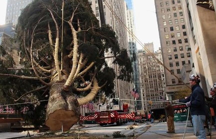 В Нью-Йорке установили живую 23-метровую рождественскую ель