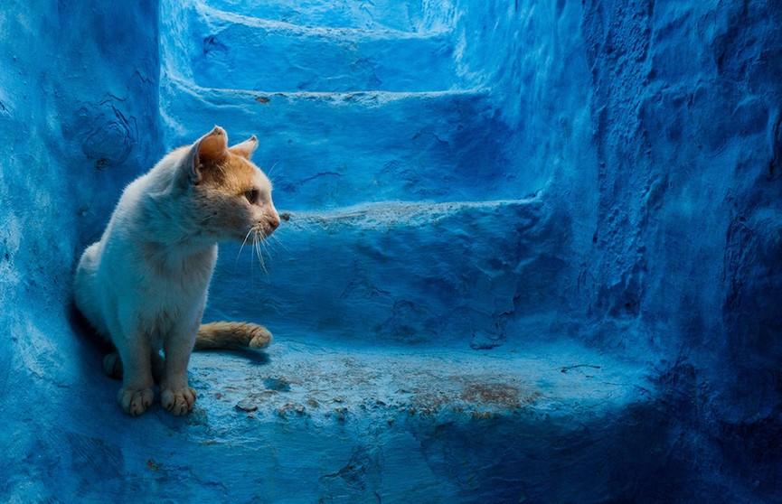 Фотофакт: марокканский город Шавен на завораживающих снимках