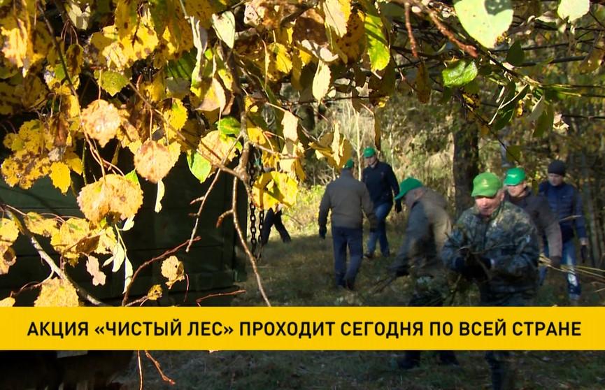 Республиканская акция «Чистый лес» пройдет в Беларуси