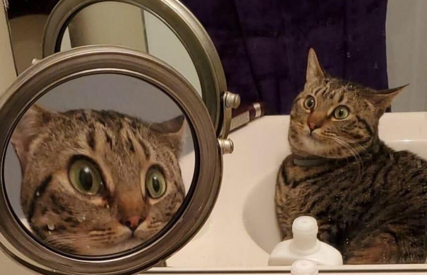 Пользователи Сети восхитились кошкой, удивленной собственным видом