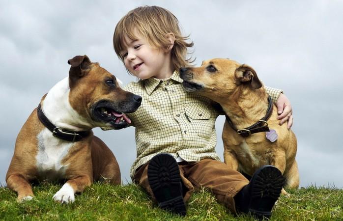 «Купите мне собаку!» 15 лучших пород собак для детей