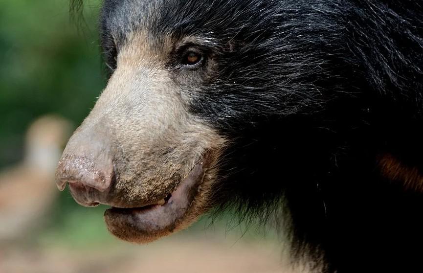 Лесничие спасли пастуха от двух самых опасных медведей в мире