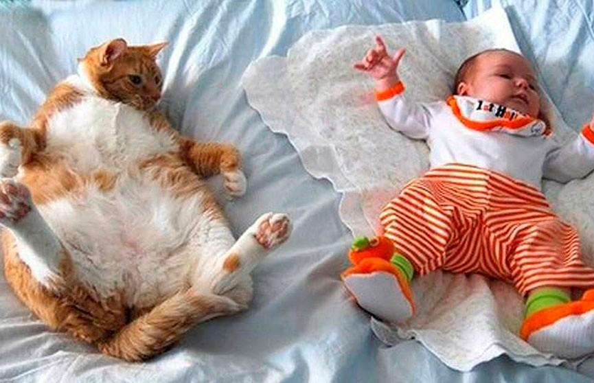 Какие милые! 15 фото котов и детей, которые не оставят вас равнодушными